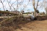 Traslado de árboles en Av. Belloni