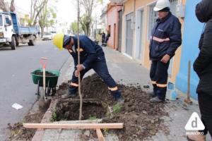 plantación de nuevos árboles