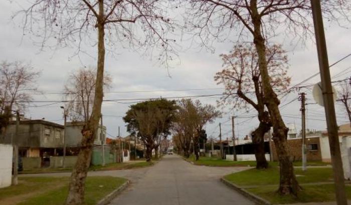 Raleo en zona 10 - Municipio d
